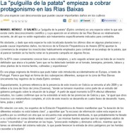 "The ""potato flea bettle"" is becoming increasingly important in the Rías Baixas"